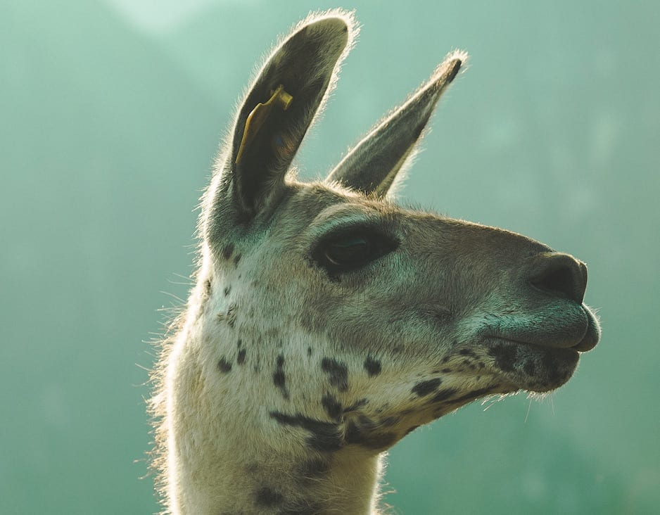 Does a llama help with SEO?